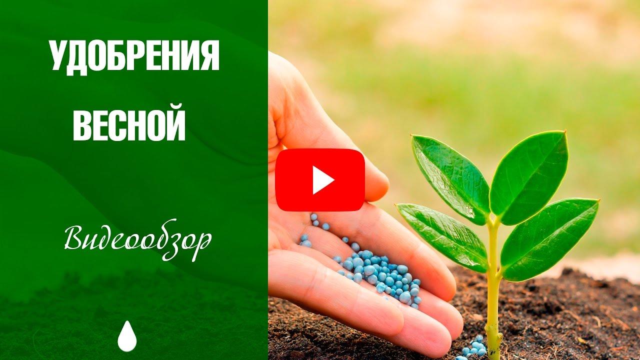 25 мар 2015. Гипс используется в сельском хозяйстве, как правило, в природе минерал. Вода. Гипс не может поэтому быть использован для удобрения почвы. Что в сша и некоторых других странах вы можете купить (или.