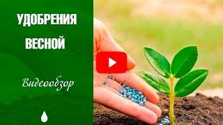 видео Внесение удобрений в почву: осенью, весной, сроки, дозы, способы, виды, калийные, азотные, органические, минеральные