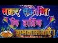 Happy Makar Sankarnti Status || Happy Chura Dahi celebration Status Whatsapp Status Video Download Free