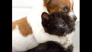 Cats and Dogs Doing Funny Things Compilation 2015
