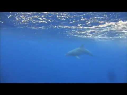 Dolphins Delight - at Shag Rock (Golf of Suez), Sharm El Sheikh, Egypt 2013 (mobile remix)
