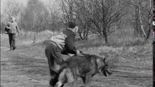 Болотная собака (1960г)
