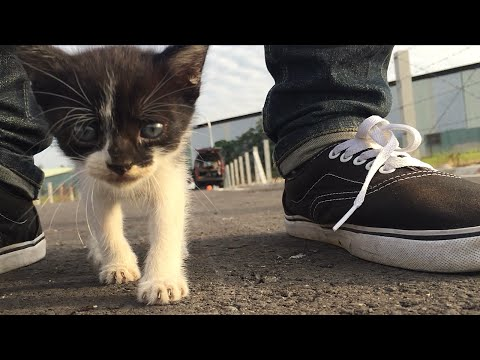 Cute Stray Kitten Follows Us Around