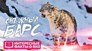 ИНТЕРЕСНЫЕ ФАКТЫ О ВКО: Снежный барс