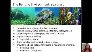Oceans: Life in the oceans
