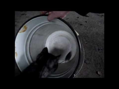 Как приучить кошку ловить мышей