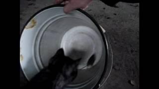 Как я учил кота мышей ловить