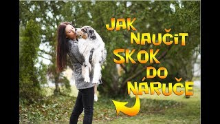 How to teach your dog JUMP INTO YOUR ARMS | Tutorial | Veronika&Akim