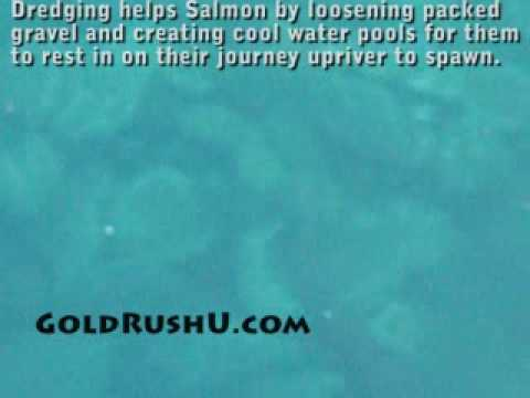 Gold Dredging helps Salmon
