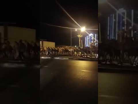قطيع من الابل السودانية في شوارع طرابلس الليبية ..
