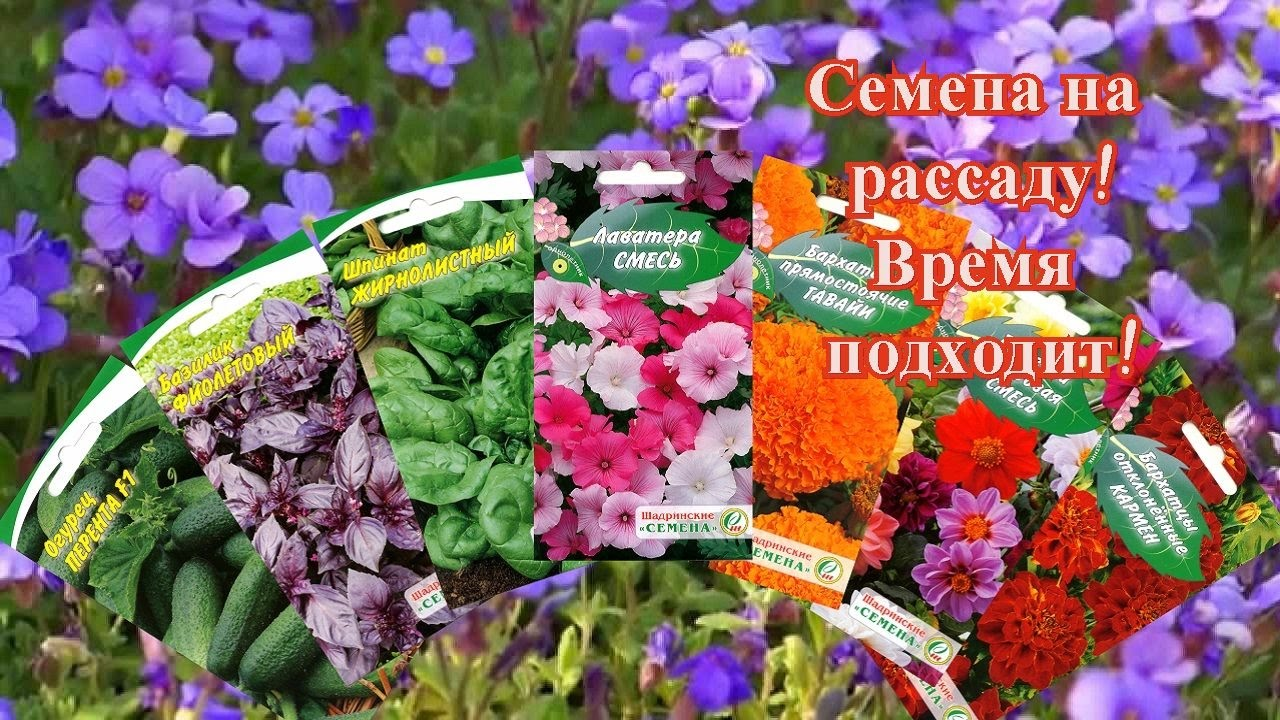 Сад огород своими руками алиссум
