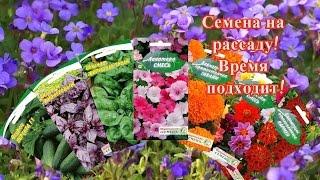 Семена на рассаду.  Алиссум, лапчатка и обриета  как посадить семена на рассаду.