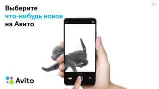 Avito: Коты 2