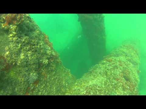 Free Diving With Goliath Grouper In Boca Grande Florida