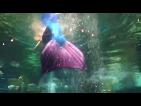 Mermaids Captured Live!