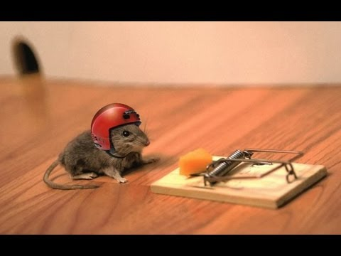 Image result for mouse trap fail