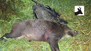 Summer wild boar stalking - Polowanie na dziki - Chasse Sanglier - Saujagd 2016