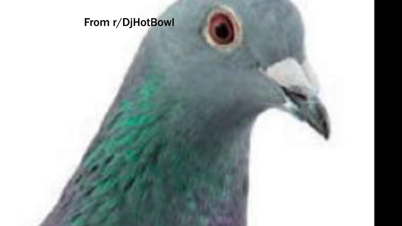 Pigeon Copypasta