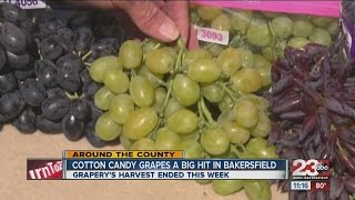Cotton candy grapes a big hit in Bakersfield
