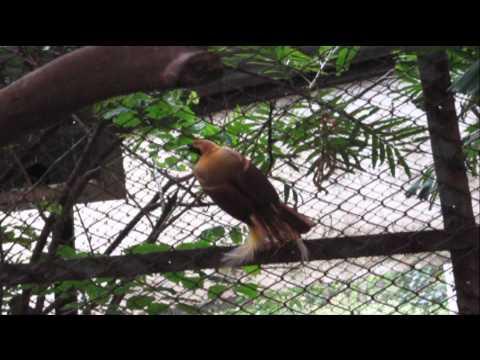 Geo 2010 1001879 drs Fauna Australis di indonesia