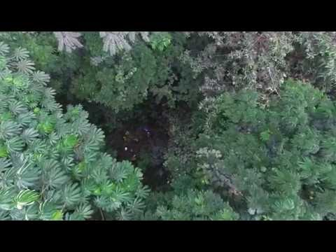 Forest Drone Monitoring trial - Azeitona Protected Area - Príncipe - NO SOUND