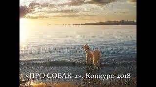 Автор ролика Виталий Тищенко (Ростов-н/Д). «Про собак 2».  Конкурс-2018