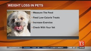 Pet Vet: Weight loss in pets