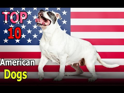 Top 10 American dog breeds | Top 10 animals