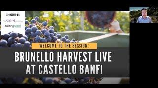 Brunello Harvest at Castello Banfi