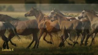 Карапетян Гарик   Белый конь