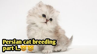 Persian cat breeding business // Complete details on Persian cat part 1//