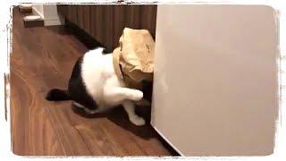 САМЫЕ СМЕШНЫЕ КОТЫ | MOST FUNNY CATS #541