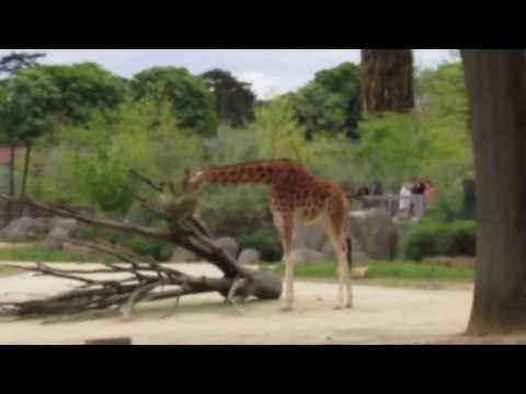 La pas spre Parc Zoologique de Paris