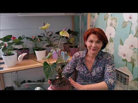 Вопрос: Какие растения можно посадить в верх корнями?