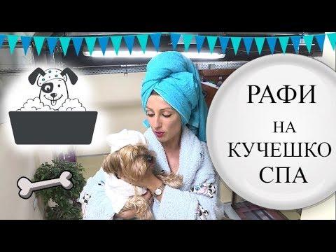 Кучешко СПА/Ася Енева/Dog's SPA/Asya Eneva