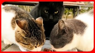 feed street cats. покормил бездомных кошек.