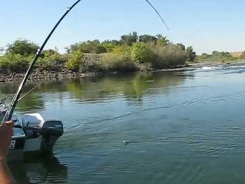 Salmon fishing on the feather river youtube for Feather river fishing report