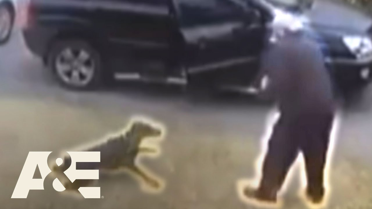 Doberman Gets Shot While Saving His Owner From Muggers | An Animal Saved My Life | A&E