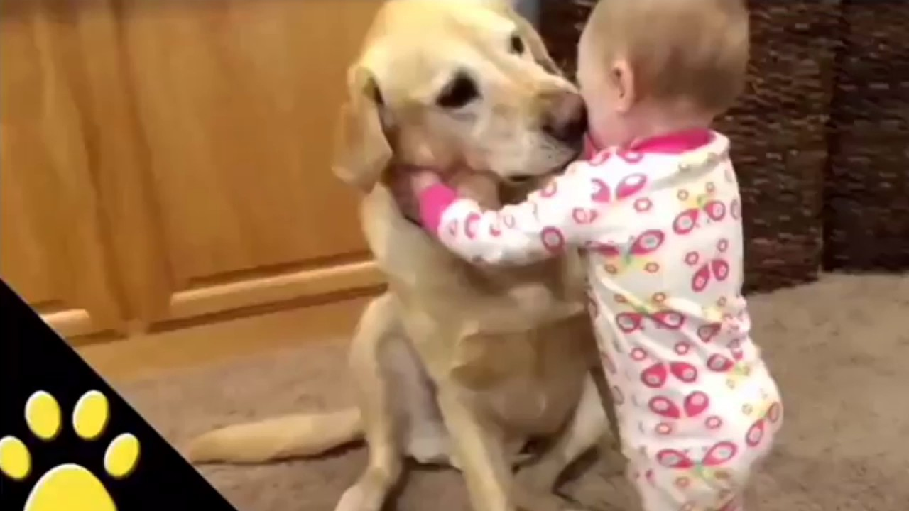 This is why we love Dogs ?. ?hotvocals