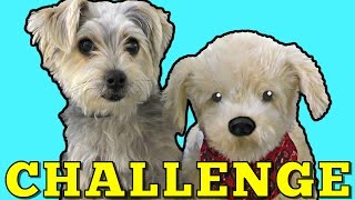 DOG Challenge - Zumi vs Georgie The Interactive Toy Dog (12 Commands) DCTC Pet Videos