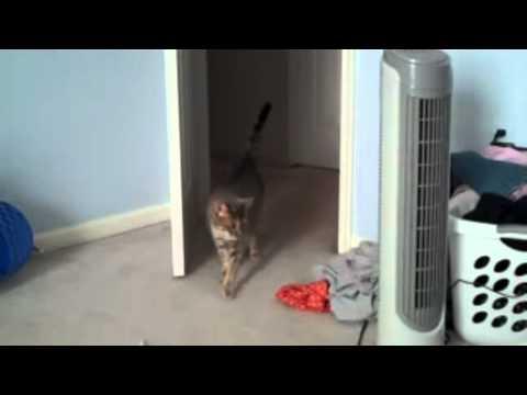 FUS RO DAHH!!!!!!!!  -CAT-