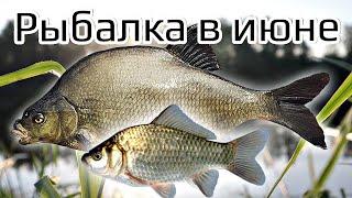 Секреты на рыбалке в июне которыми будете пользоваться всегда! Особенности рыбной ловли в июне