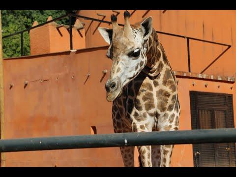 ¿Quieres saber cómo serán las visitas en el zoo a partir de ahora?