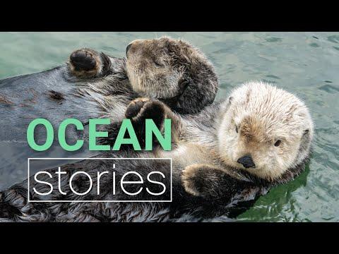 Cute Sea Otter Behaviour Decoded