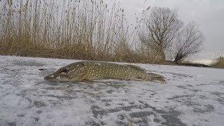 Зимняя рыбалка в раскатной части дельты Волги. Ловля щуки на жерлицы. Наказала рыбоохрана
