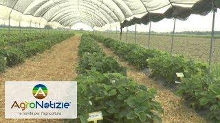 Berry, produttori russi in visita a Geoplant