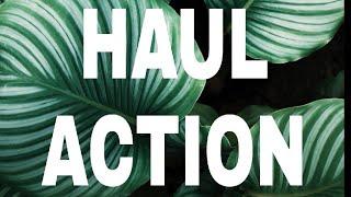Haul action 1 juillet  2018