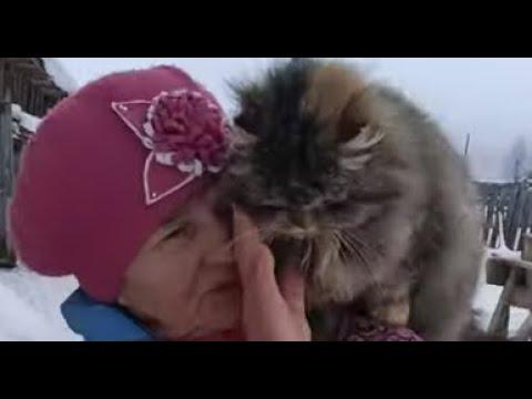Деревенская кошка Пушинка самая умная кошка в мире ❤️ smart cat