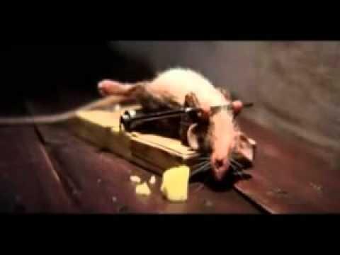 Lustige Maus/Werbespot