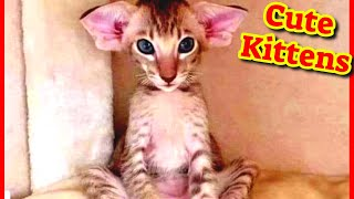 Cute Kittens  Cat Videos  Funny Cat Videos Vol#7